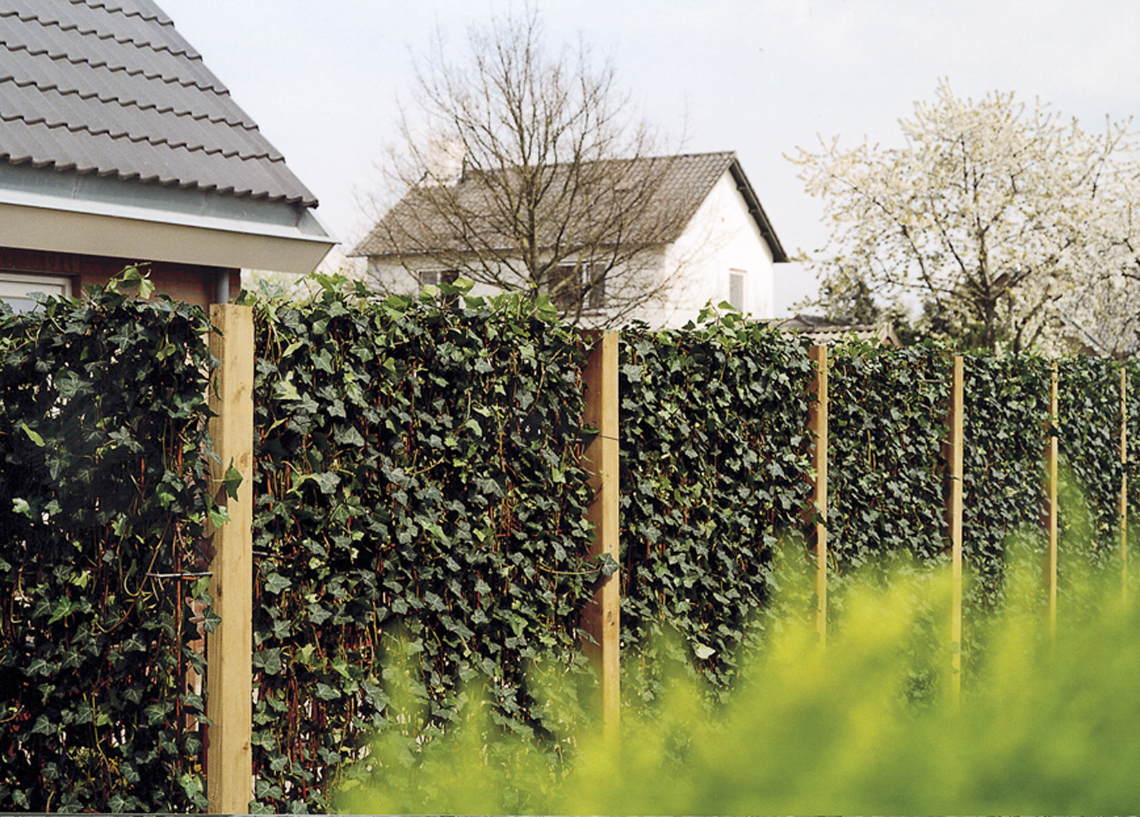 die hecke am laufenden meter zaun pflanzen oder hecke bauen moderner sichtschutz im garten. Black Bedroom Furniture Sets. Home Design Ideas