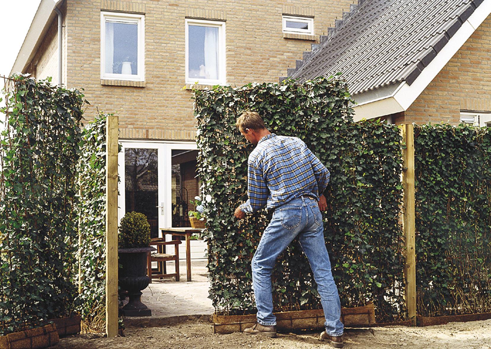 Erstaunlich Sichtschutz Zaun Holz Material Minimalistisch Beet Pflanzen  UX05