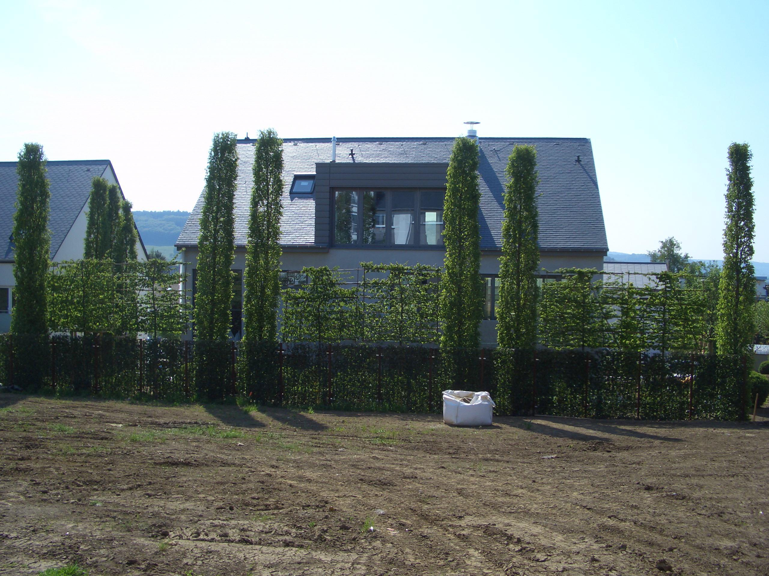 Spalierbaume Die Schwebende Hecke Moderner Sichtschutz Im Garten