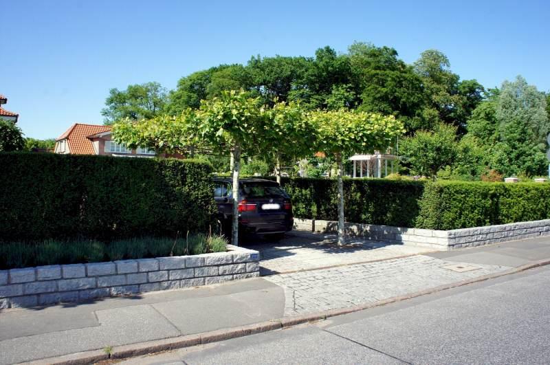 Dachplatane als Sonnenschutz Quelle: pflanzmich.de