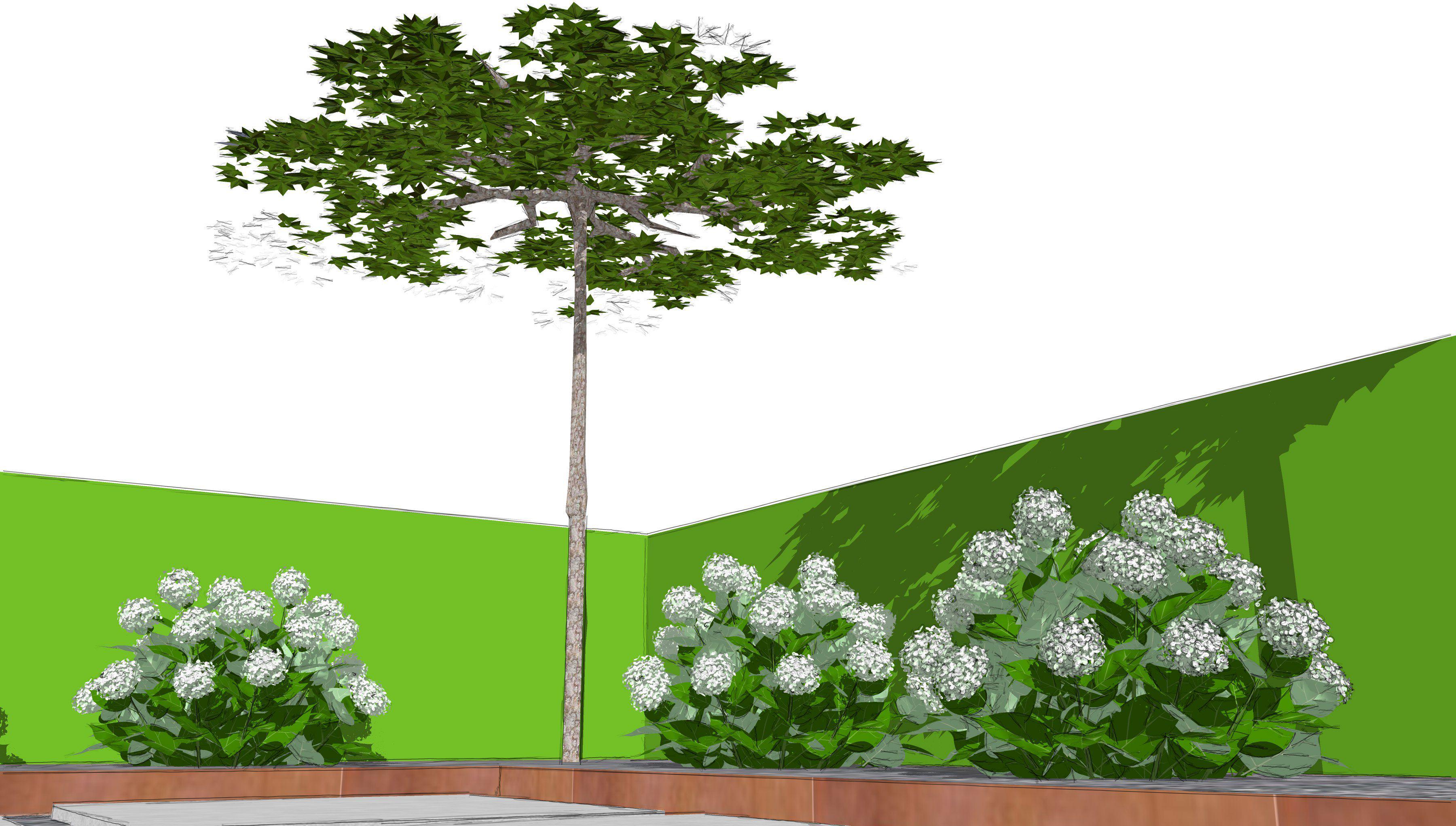 Grüner Patio aus Dachplatanen mit Heckeneinfassung, Grossformatplatten, Cortenstahlband und Hortensien