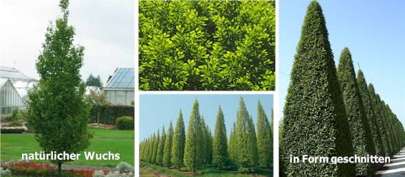 Moderner Sichtschutz Im Garten Seite 2 Von 4 News Informationen