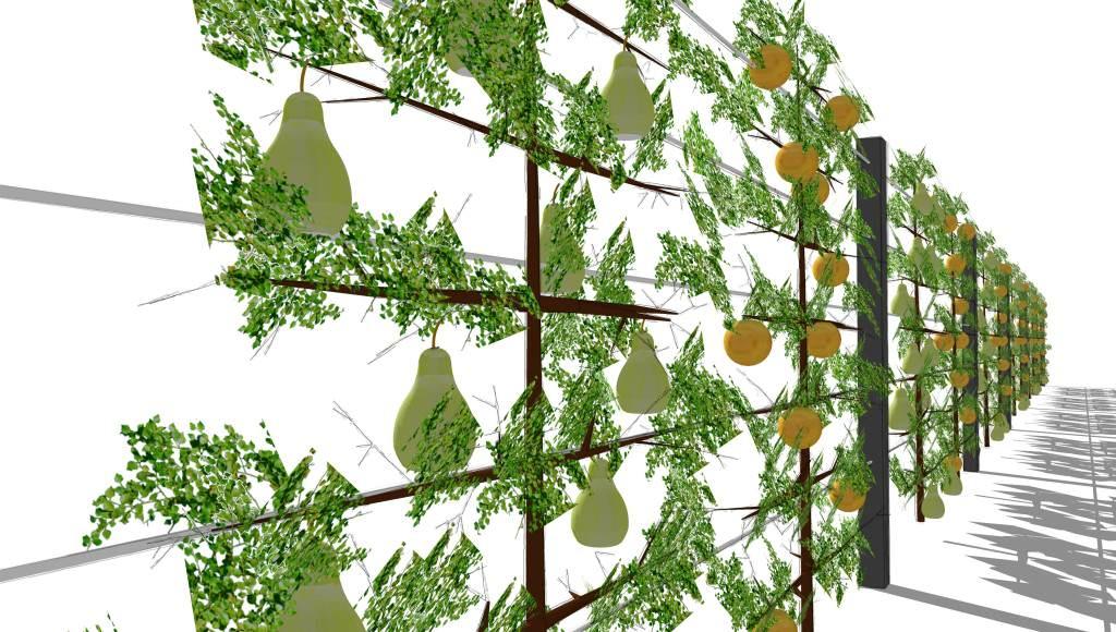 Sichtschutz mit Spalierobst, Aluminiumpfosten und Edelstahlseilen