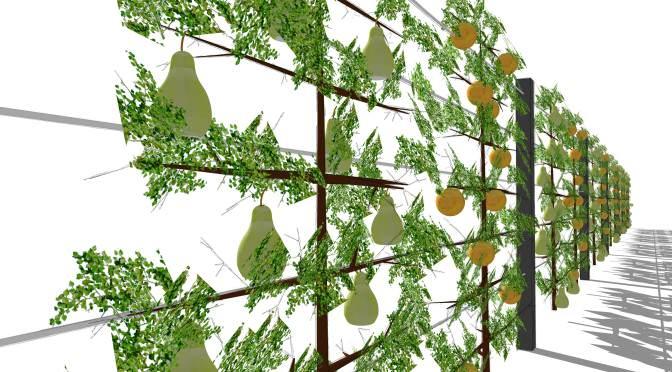 Sichtschutzkombinationen – Teil 6: Sichtschutz mit Spalierobst, Aluminiumpfosten und Edelstahlseilen