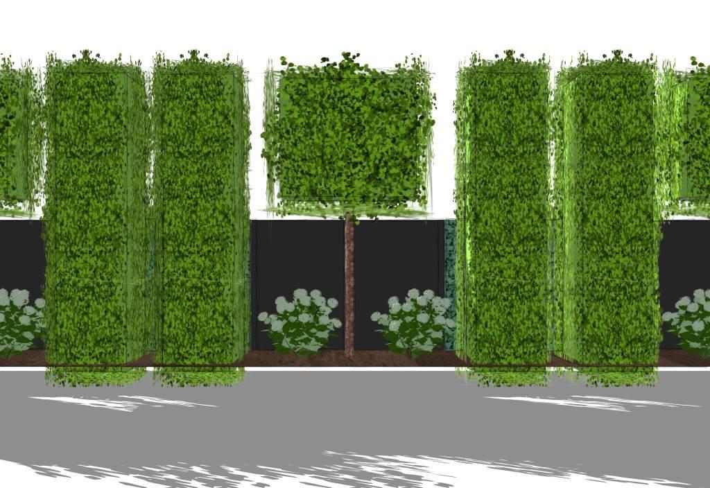 Moderner sichtschutz im garten news informationen und for Gartengestaltung sichtschutz pflanzen modern