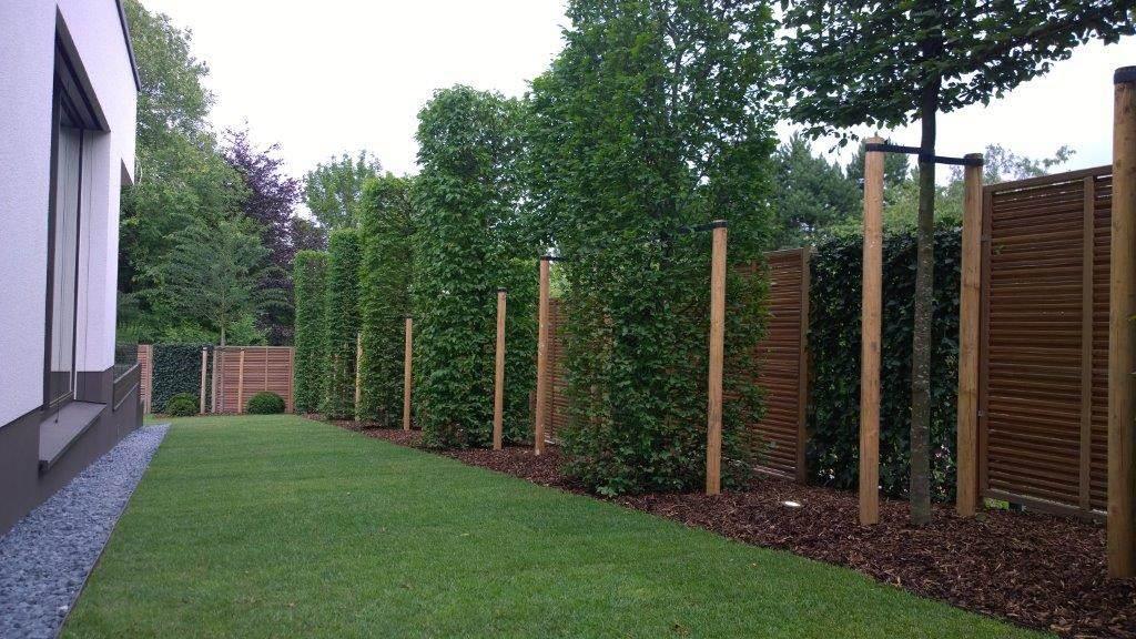 Spalierbäume, geschnittene Säulenbäume, Hecke am laufenden Meter